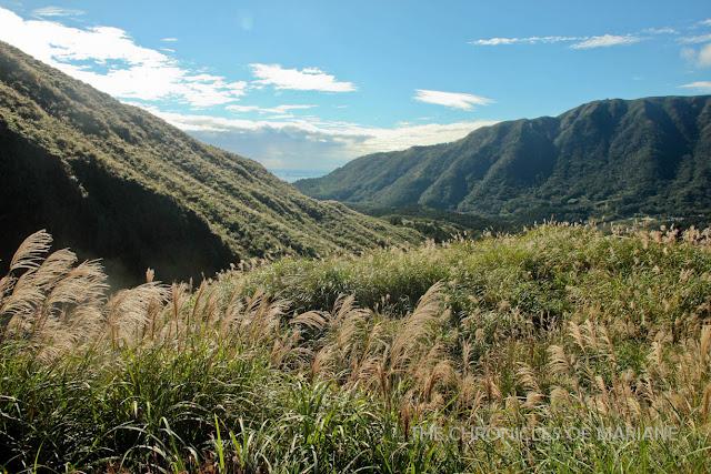 yangmingshan silver grass