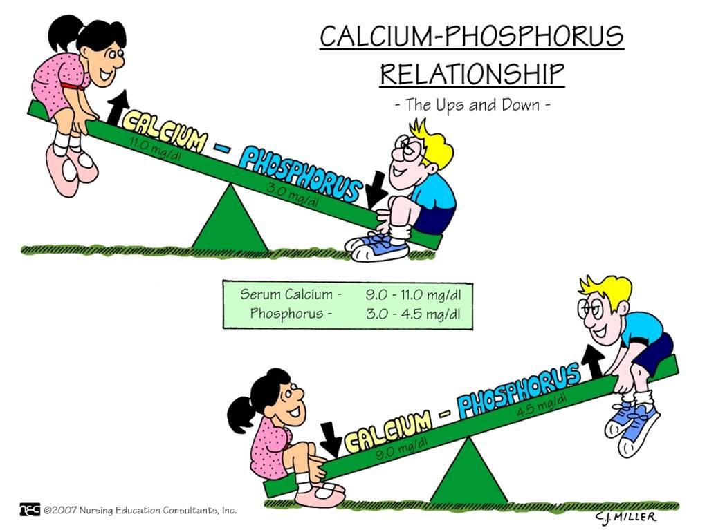 calcium magnesium and phosphorus relationship