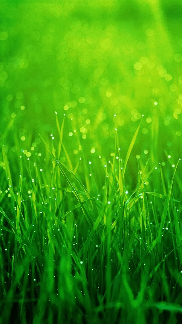 Top Blackberry Themes Free Grass Iphone 5 Wallpaper