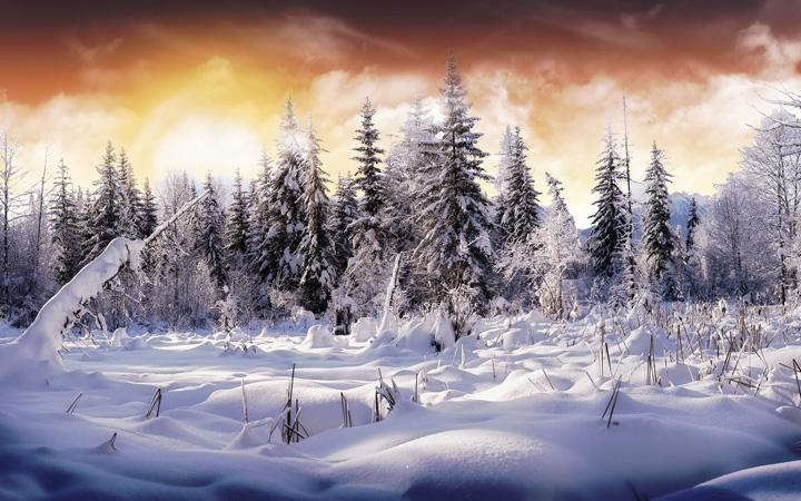 ağaç manzaralı kış resimleri
