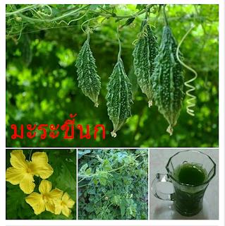 สมุนไพรรักษาโรคเบาหวาน Thai Herb สรรพคุณและประโยชน์ โทษ ผลข้างเคียง สมุนไพรรักษาโรค แคปซูล โรคเบาหวาน ลดน้ำตาลในเลือด สมุนไพรเบาหวาน  ราคาถูก ราคาส่ง