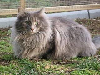 Qual a diferença entre gatos e gatos selvagens? (Foto: Reprodução)