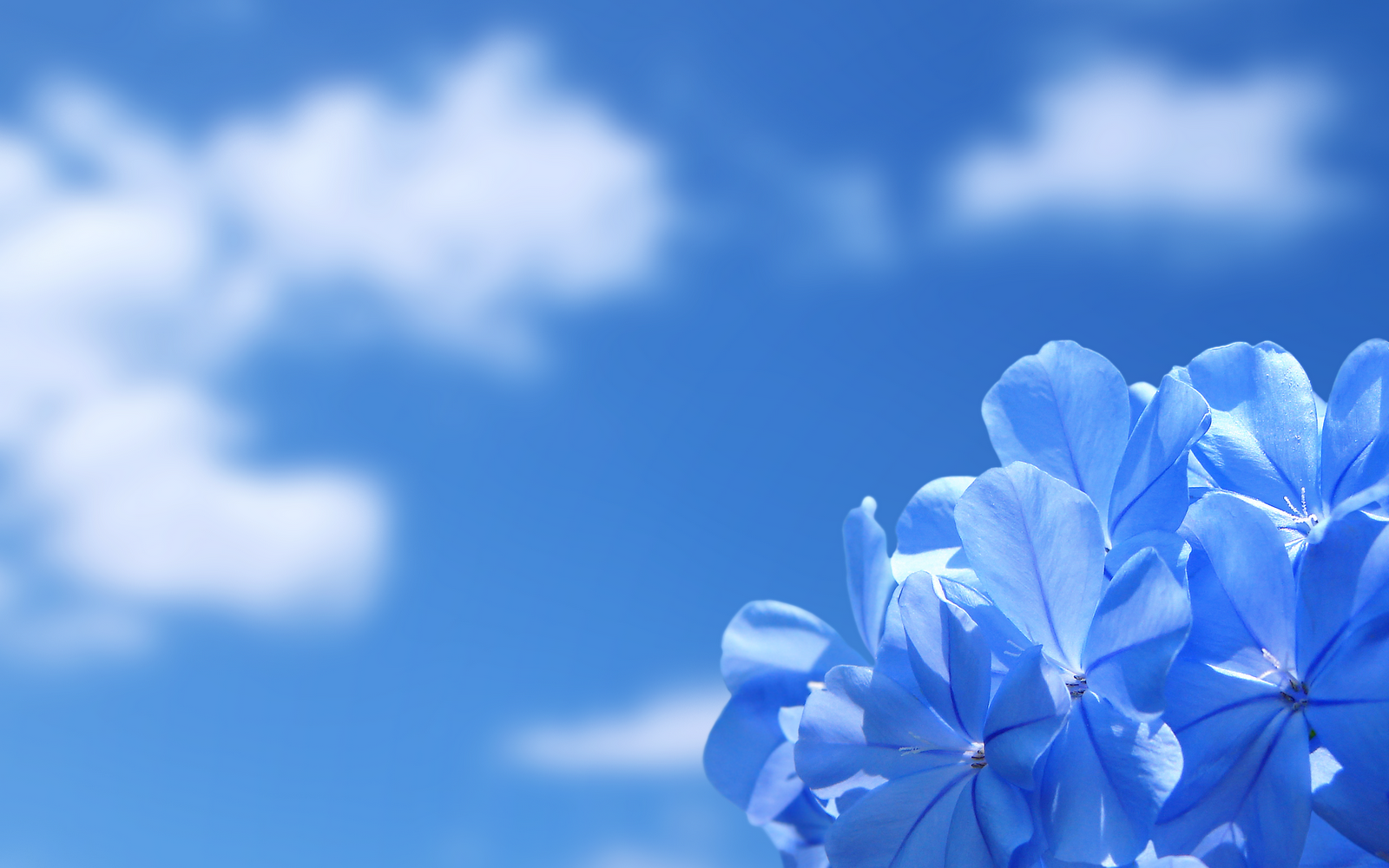 Download Free HD Wallpapers Of Flower Background