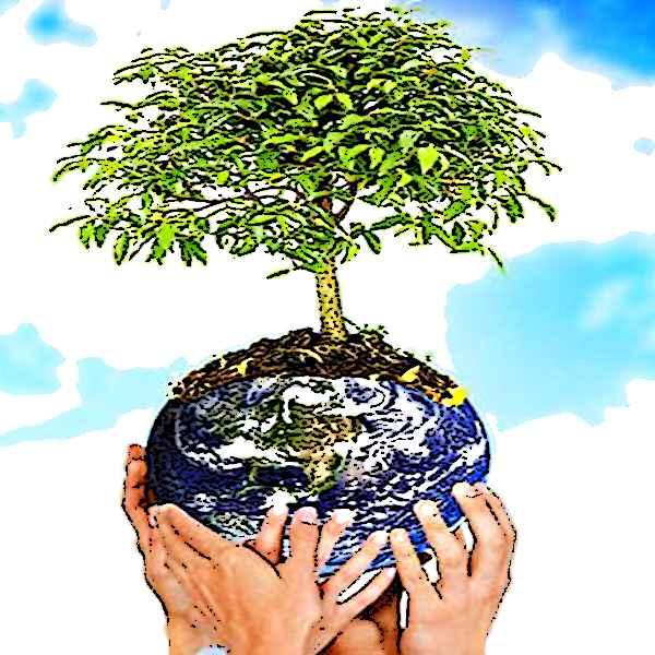 Эссе на тему защита окружающей среды 4414