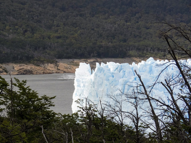 Perito Moreno Glacier viewed through the trees in Argentina
