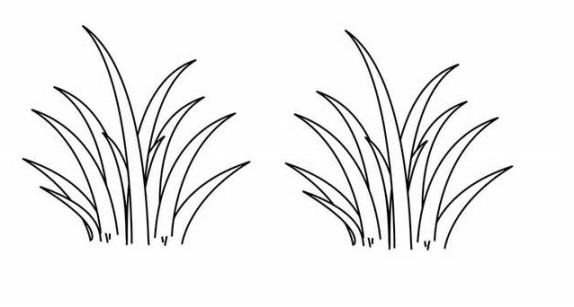 gambar mewarnai rumput terbaru