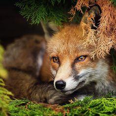 animals images