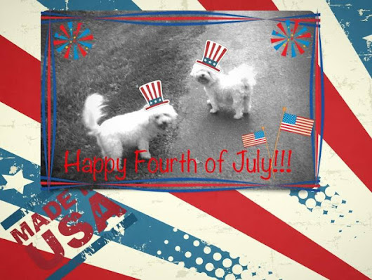 Dogs Don't Necessarily Love Independence Day As Much As We Do!