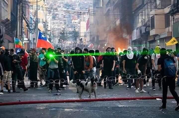 #Chile: simularon una marcha para llevar a #Firulais (Vaquita), icono de la lucha en Antofagasta al veterinario
