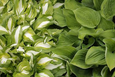 https://pixabay.com/pl/lato-zielony-trawa-zbli%C5%BCenie-1620161/