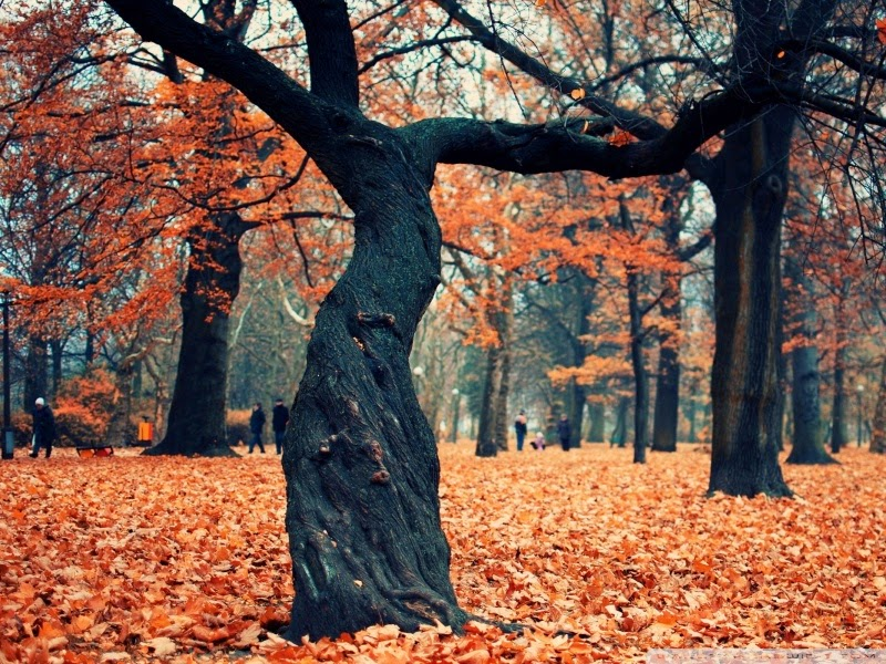 beautiful autumn 25 Best Wallpapers For HTC Nexus 9