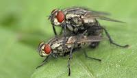 Έτσι θα εξολοθρεύσετε τις μύγες από το χώρο σας! BINTEO