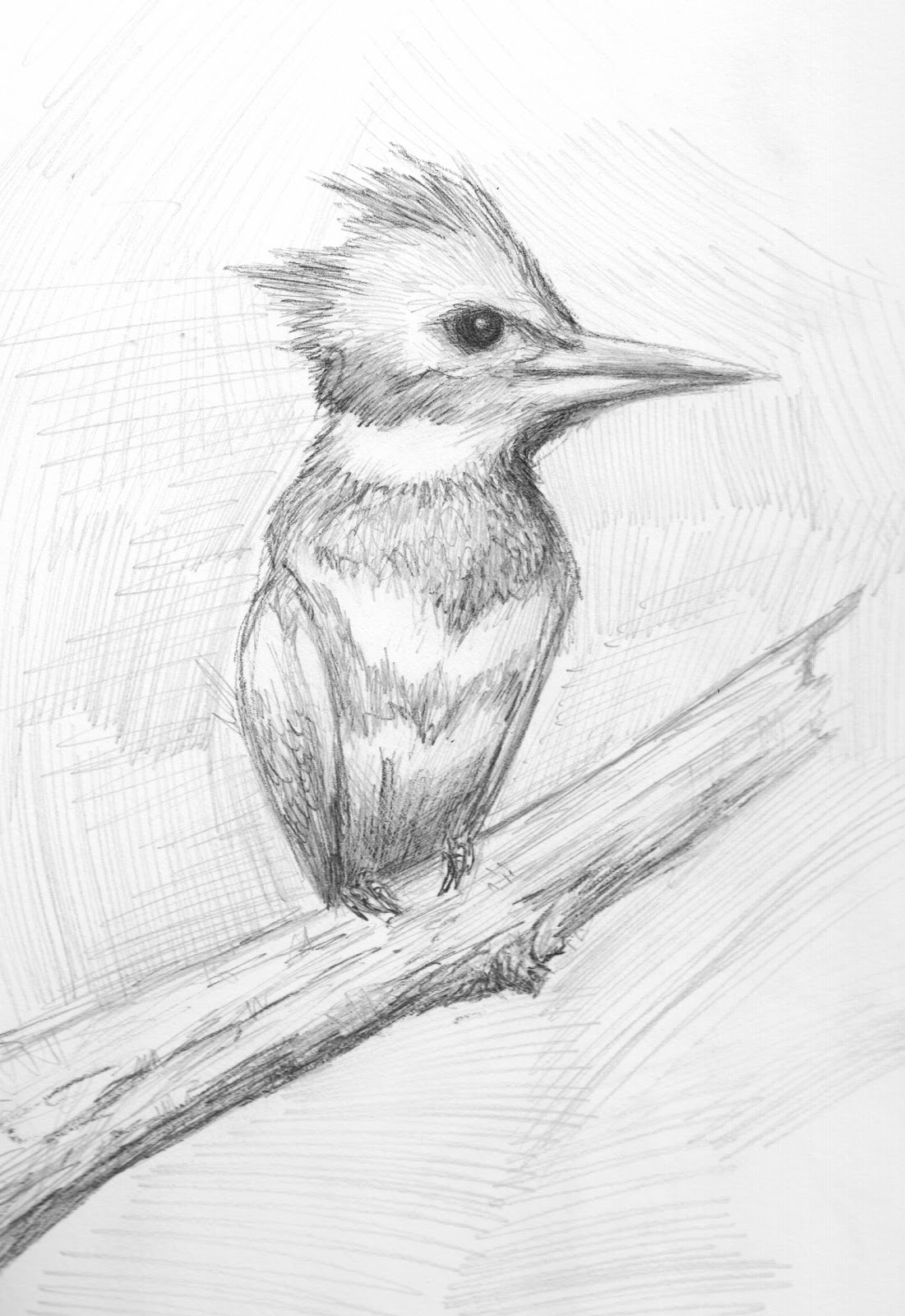 pretty good blog: Bird Pencil Drawing - Kingfisher