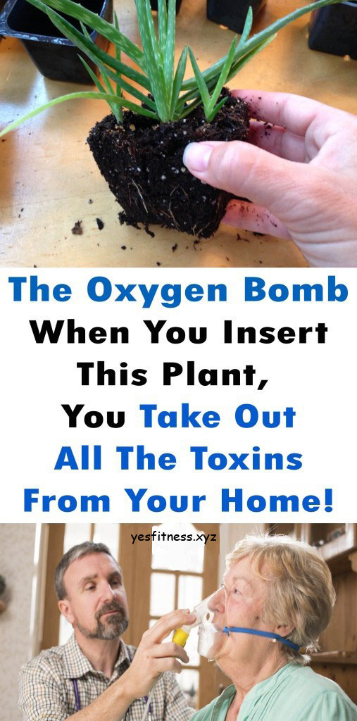 The Oxygen Bomb: When You Insert This Plant, You Take Out All The Toxins From Your Home!