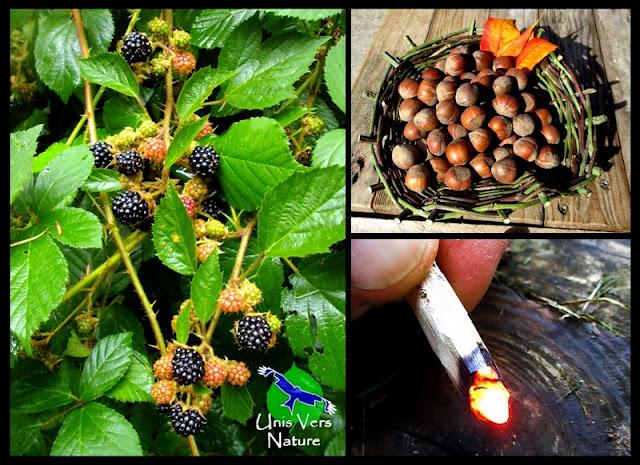 ronce commune, rubus fruticosa, mures, vannerie sauvage de ronce, bushcraft, alllumer feu