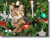Picture of cat in Christmas tree