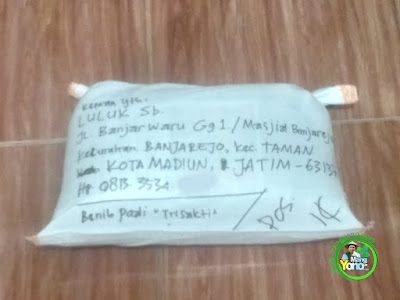 Benih pesanan  LULUK Sb Madiun, Jatim  (Setelah Packing)