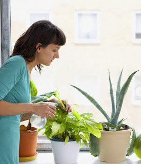 Easy Tricks for Indoor Plants Care for Beginners