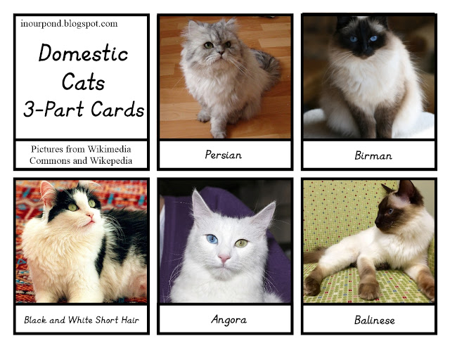 FREE 3-Part Cards for Safari Ltd Cat Toob from In Our Pond