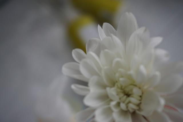 kukka, kasvi, macro, yksityiskohta