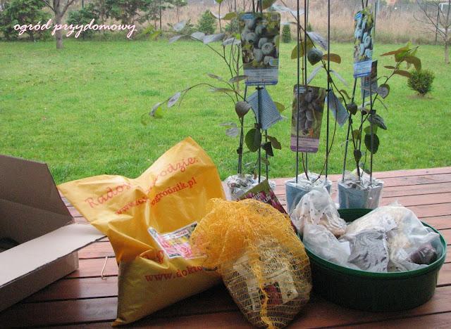 cebule kwiatowe, cebulki kwiatów, ogród przydomowy
