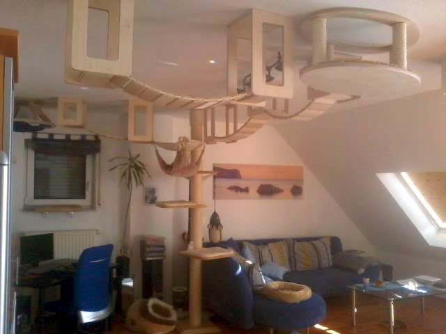 Cat Shelves Covering A Whole Living Room Ceiling With Tree Leading Up To It