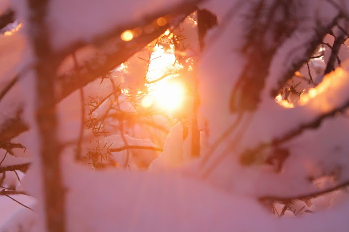 winter light - winter wonderland - finland - photography - snow - canon