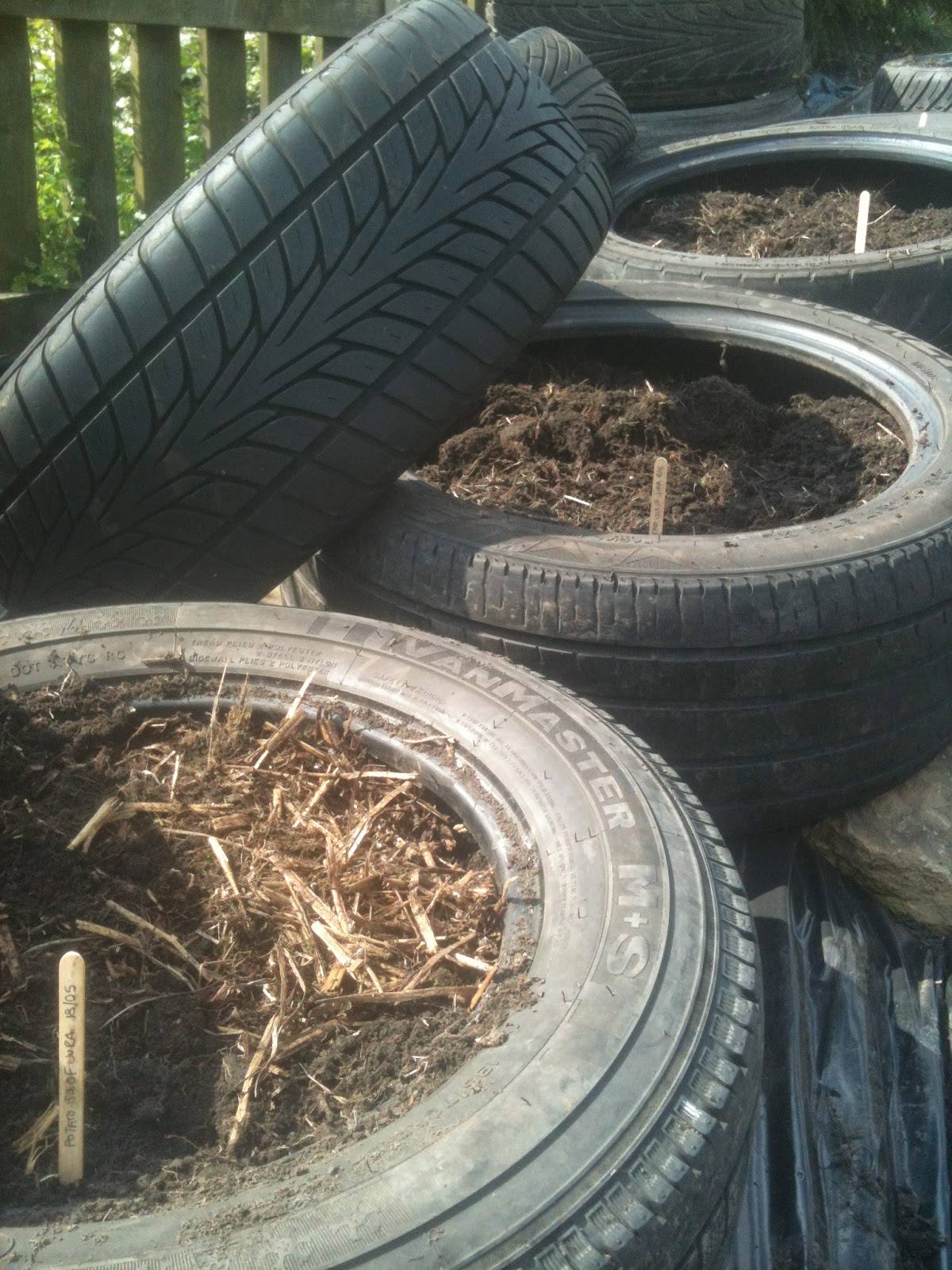 Tyres can be used as planters and coldframes #lifeonpigrow
