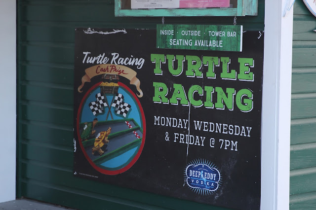 Turtle Racing in Key West, Florida