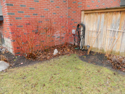 Leaside Backyard  Spring Cleanup Before by Paul Jung Gardening Services--a Toronto Organic Gardening Company