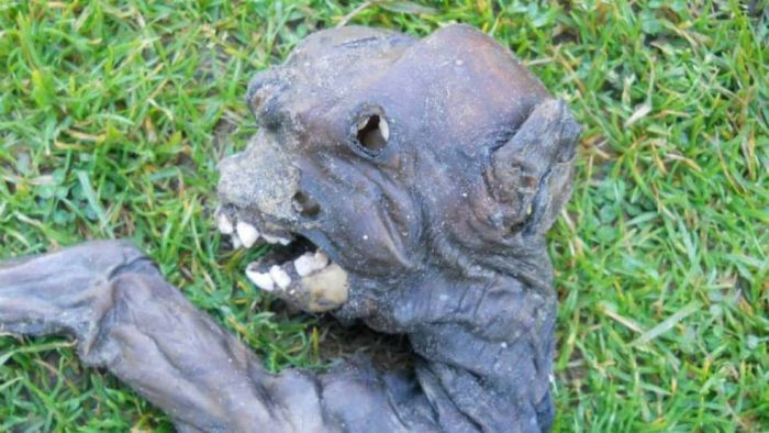 Pix Grove Alien Creature Discovered In South Africa