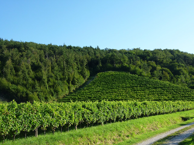vineyards of Azienda Agricola Grillo