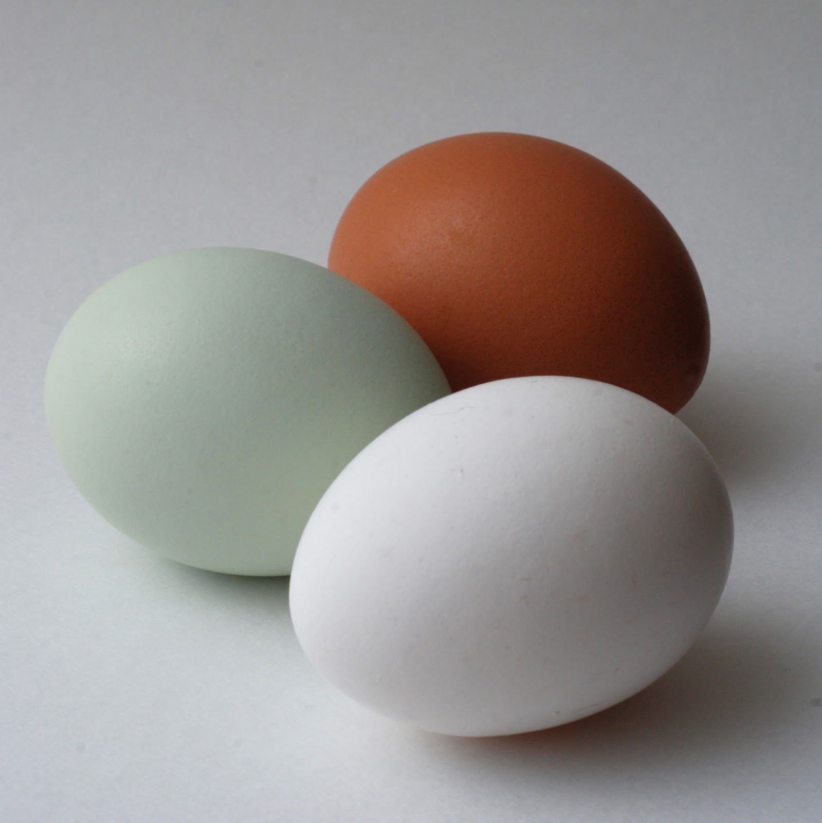 Neko Random Fact Of The Day Easter Egg Chickens