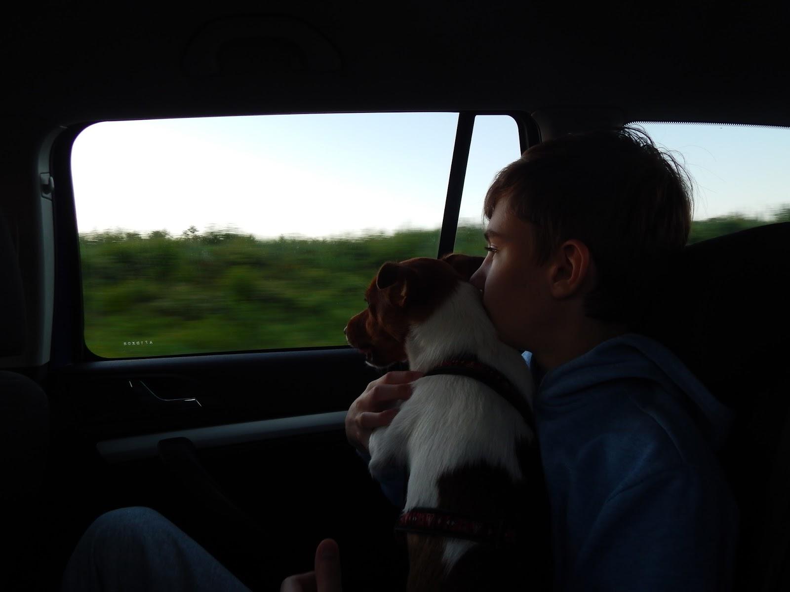 cesta autem se psem