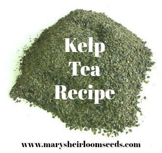 Kelp Tea Recipe For Your Garden Mary S Heirloom Seeds