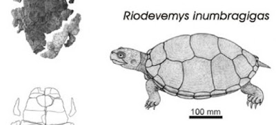 tortugas prehistoricas