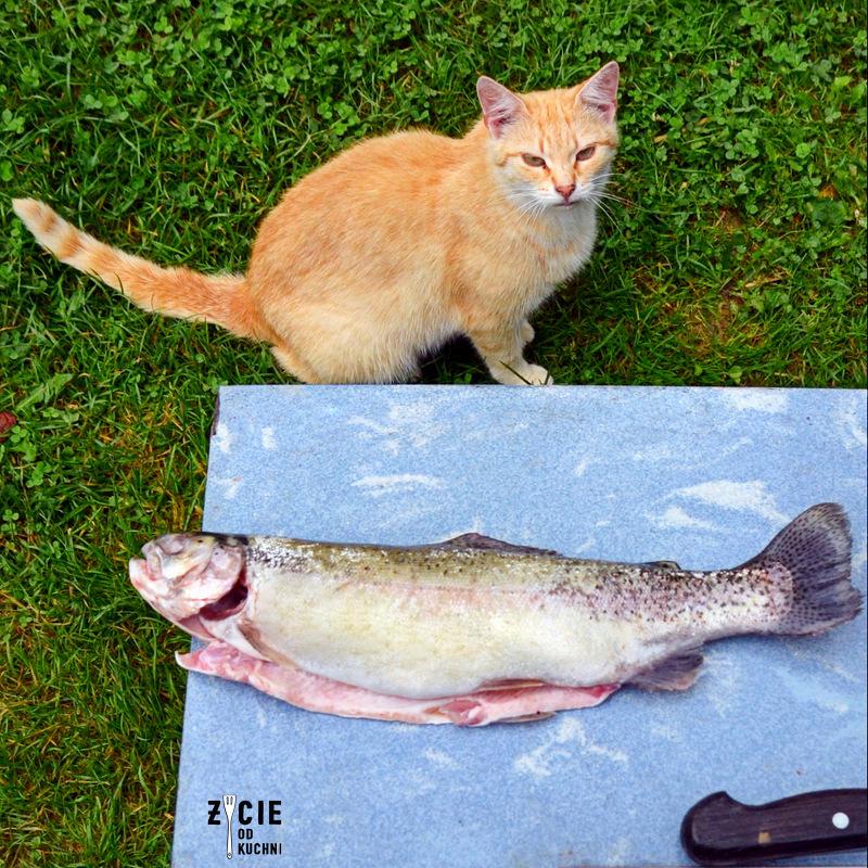 kot, rudy kot, kot i ryba, pstrag, karp wedzony, jak wedzic karpia, wedzenie pstraga, wedzenie karpia, wedzenie makreli, domowe wedzenie, jak wedzic ryby, sposoby wedzenia ryb, nasalanie wedzonych ryb, solenie na sucho, solenie na mokro, blog kulinarny, zycie od kuchni, blog zycie od kuchni