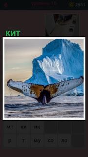 из воды выглядывает хвост кита рядом с айсбергом