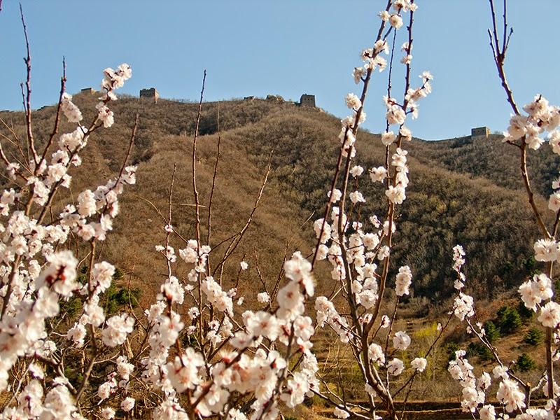 Un tronçon de la Grande Muraille à Simatai vu depuis le village de Dongpo