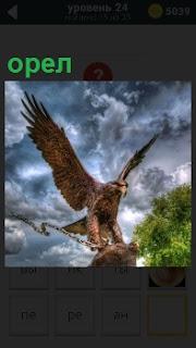 Крупная птица орел с расправленными крыльями вцепилась в свою добычу и несет к себе