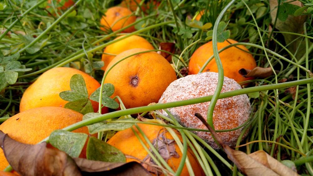 Vigopensiero arance a terra i costi di produzione 1 - Oneri diversi dalla fornitura eni cosa sono ...