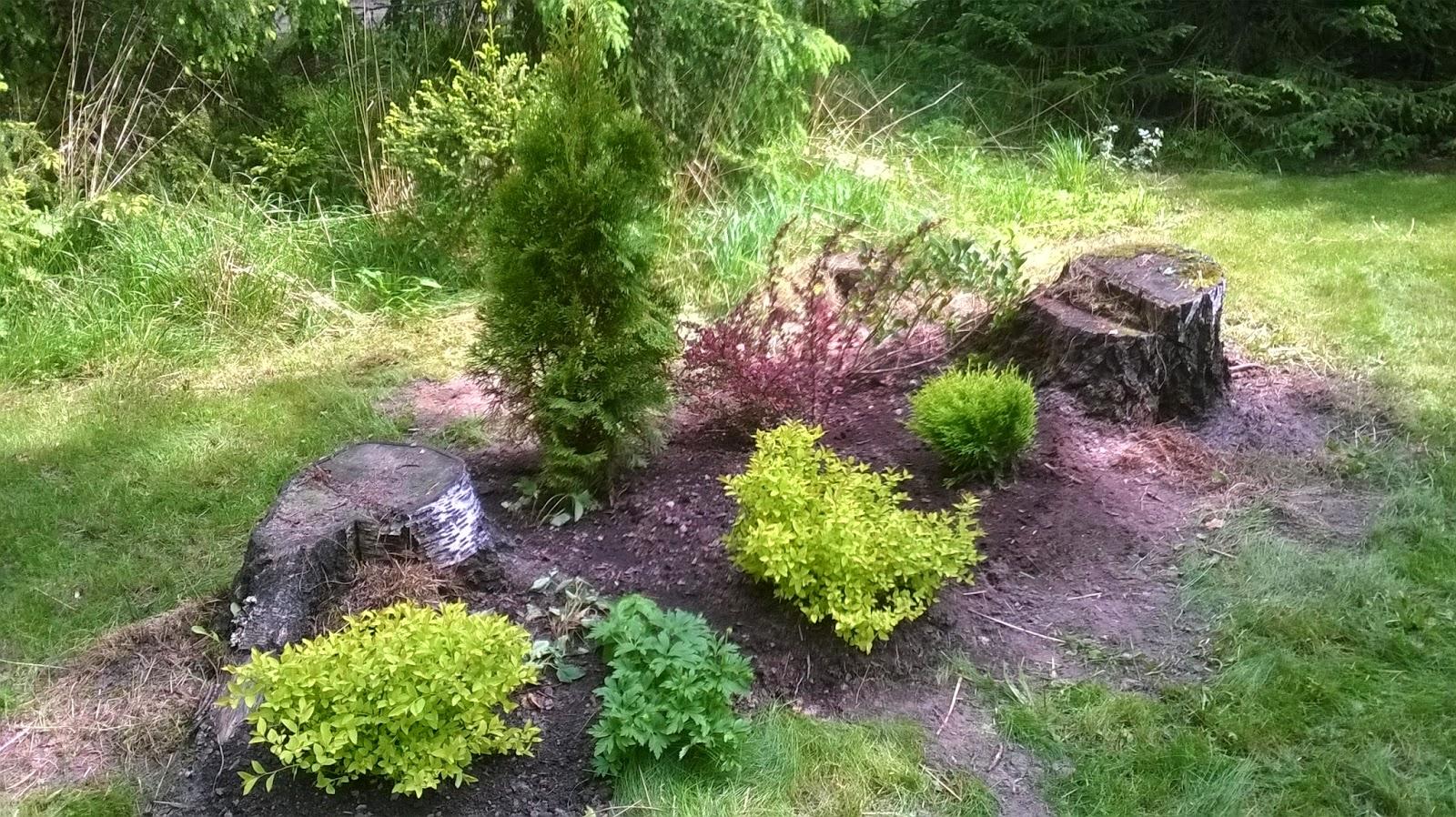 pensaiden istutus keväällä