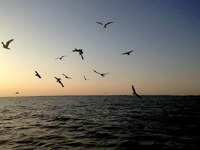 Dzikie ptaki w Delcie Dunaju