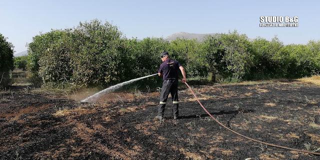 Πυρκαγιά στον Ίναχο Αργολίδας (βίντεο)