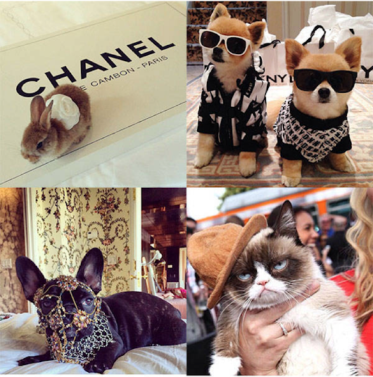 Fashion pets on instagram