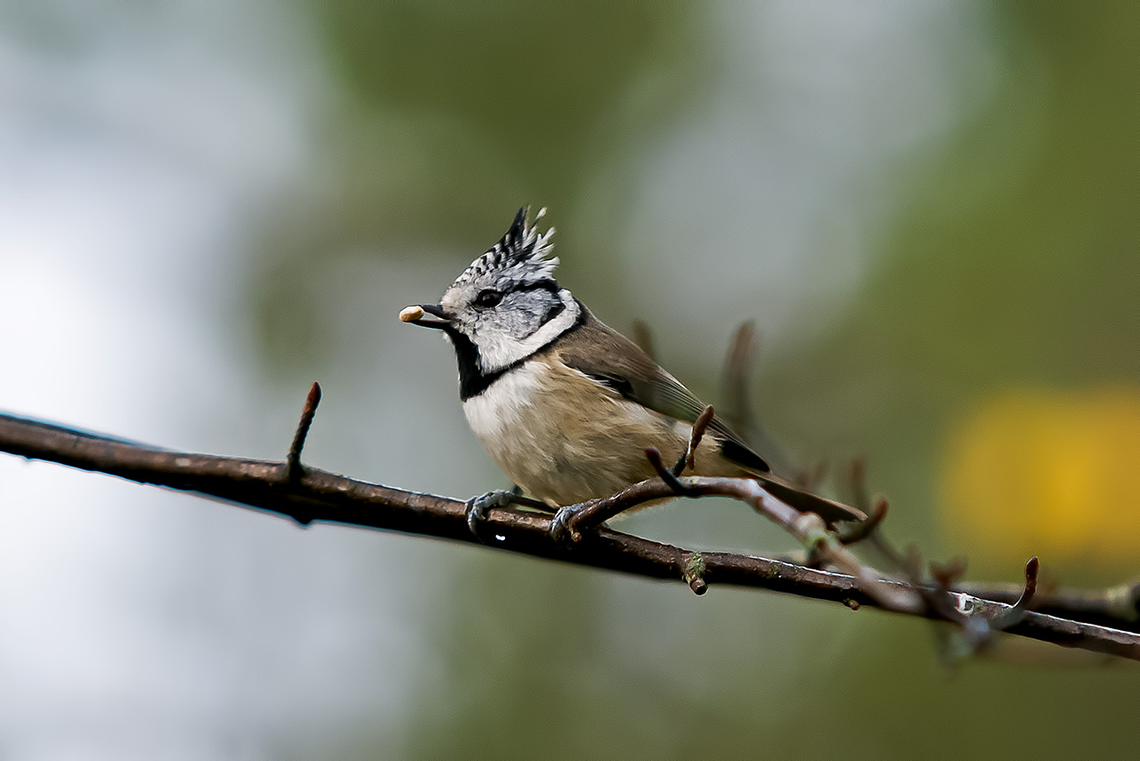 Lintulaudan Linnut
