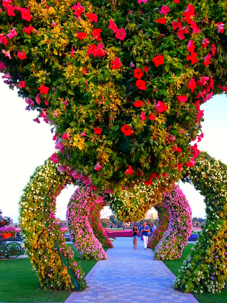 Wallpaper wallpaper dubai miracle garden for Flower landscape