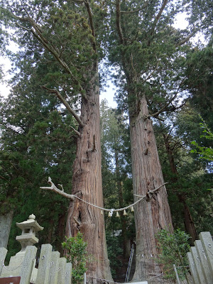 夏井諏訪大社の大杉