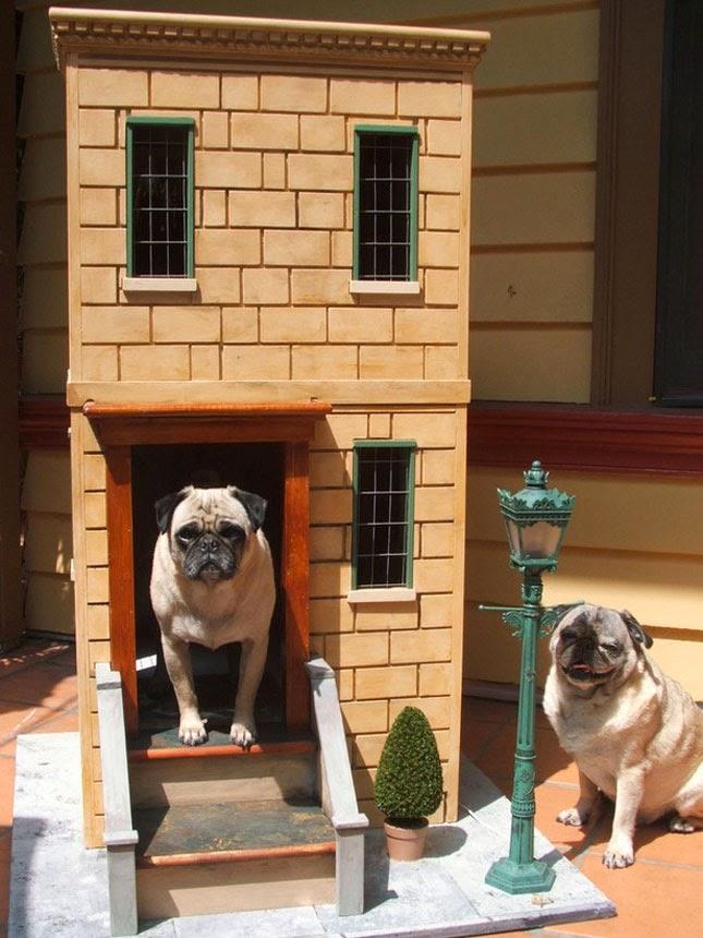 casinho de cachorro