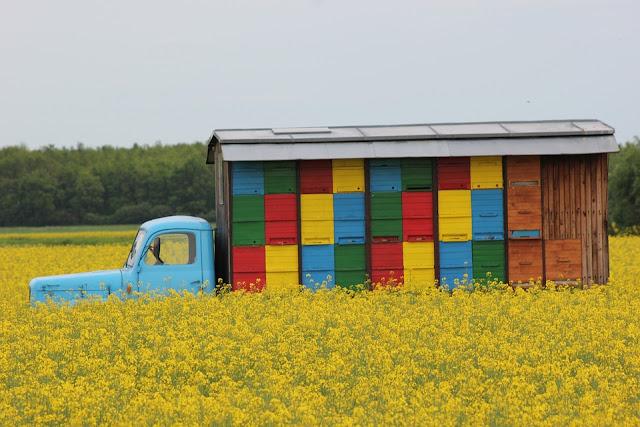Transhumancia apícola ambulante en Europa - Itinerant bee transhumance in Europe.